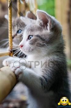 """Картина-обогреватель """"Котята"""" - фото 4779"""