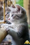 """Картина-обогреватель """"Котята"""" (уценка)"""