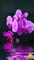 """Инфракрасный электрический пленочный настенный обогреватель """"Фиолетовое настроение"""" - фото 6222"""